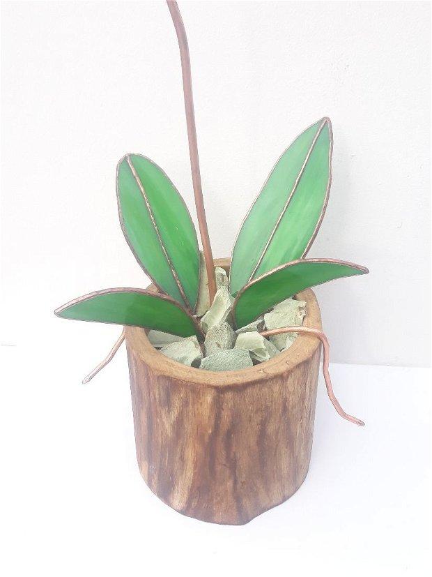orhidee din sticla