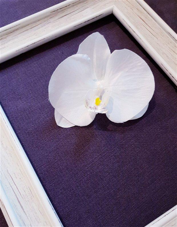 Orhidee de par