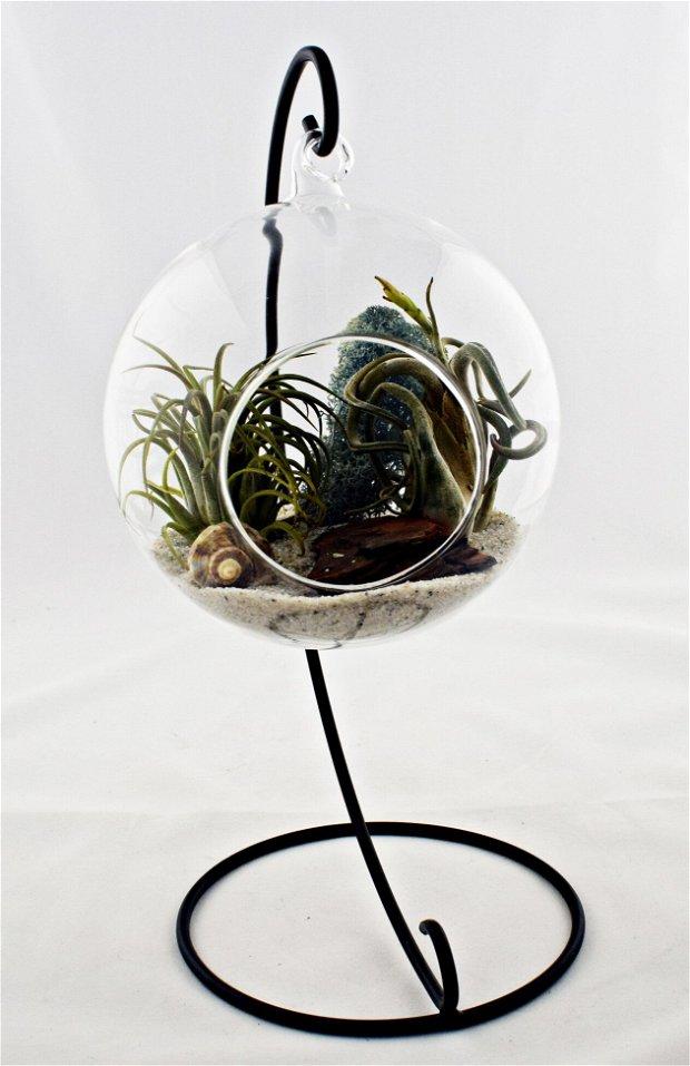 Terariu suspendat cu plante aeriene