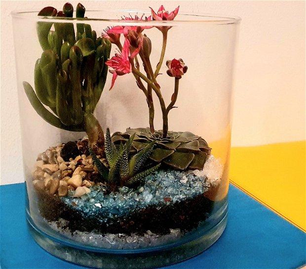 Terariu plante suculente