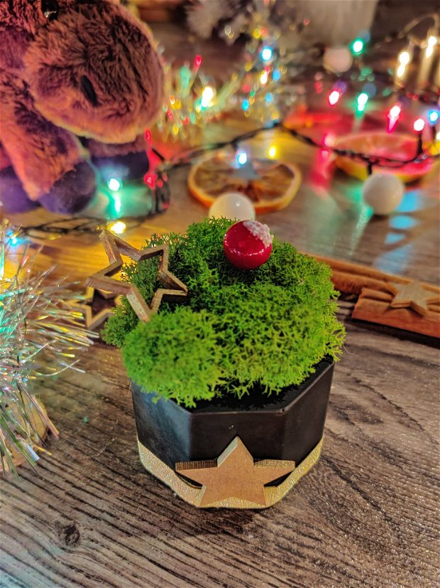Mini ghiveci cu licheni stabilizati - ediția de Crăciun