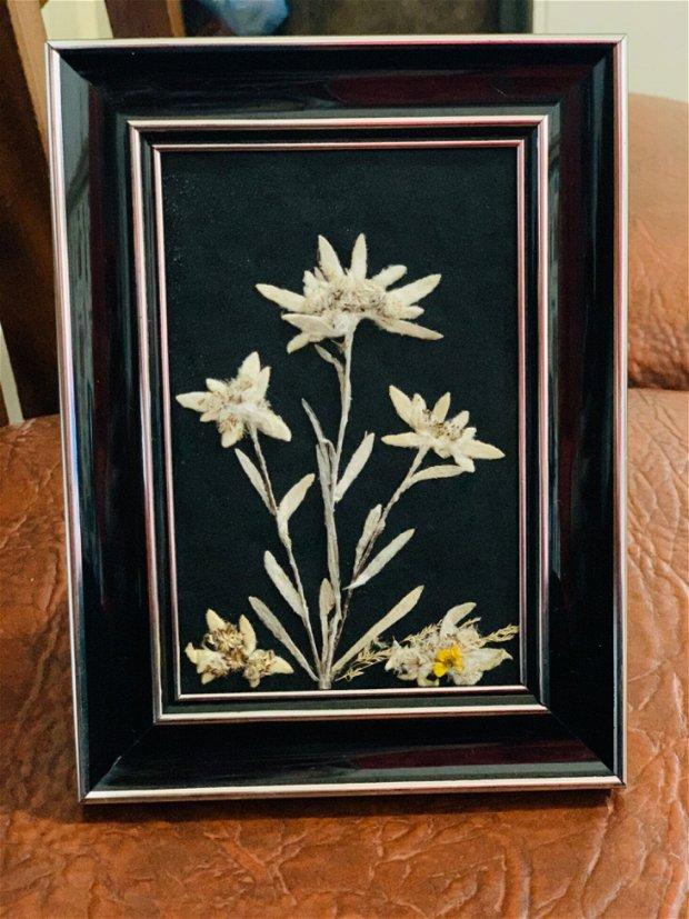Tablou Floare de Colț