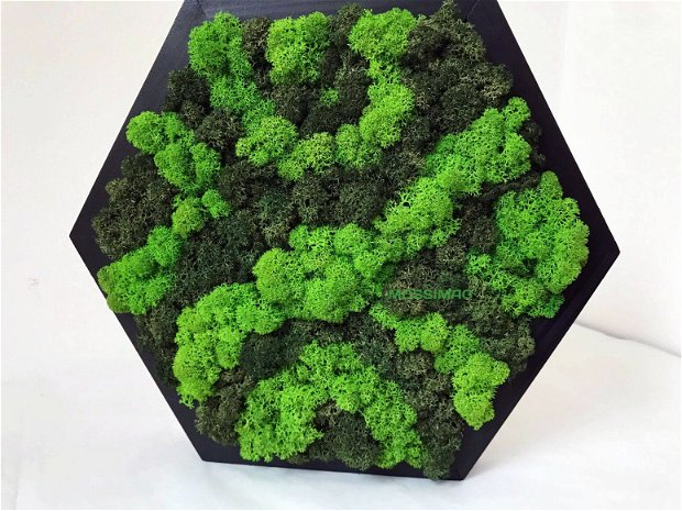 Tablouri hexagonale - set 3