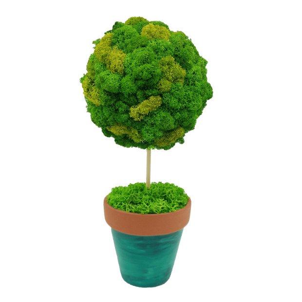 Copacel cu licheni naturali stabilizati , ghiveci pictat manual, 20 cm, verde