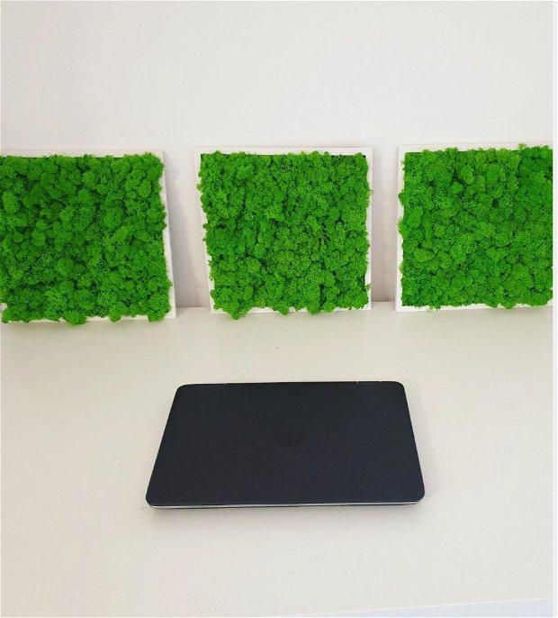 Set 3x tablou licheni verde deschis