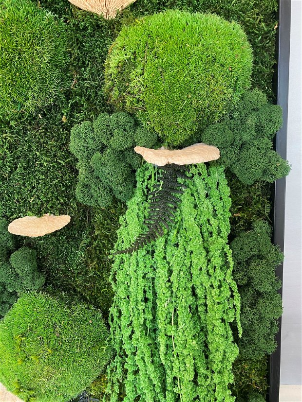 Aranjament cu muschi, licheni, ciuperci si plante stabilizate