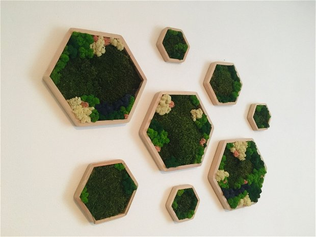 Panouri hexagonale cu licheni