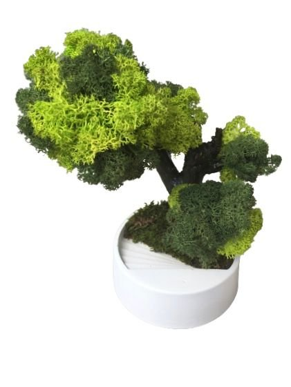 Bonsai cu licheni