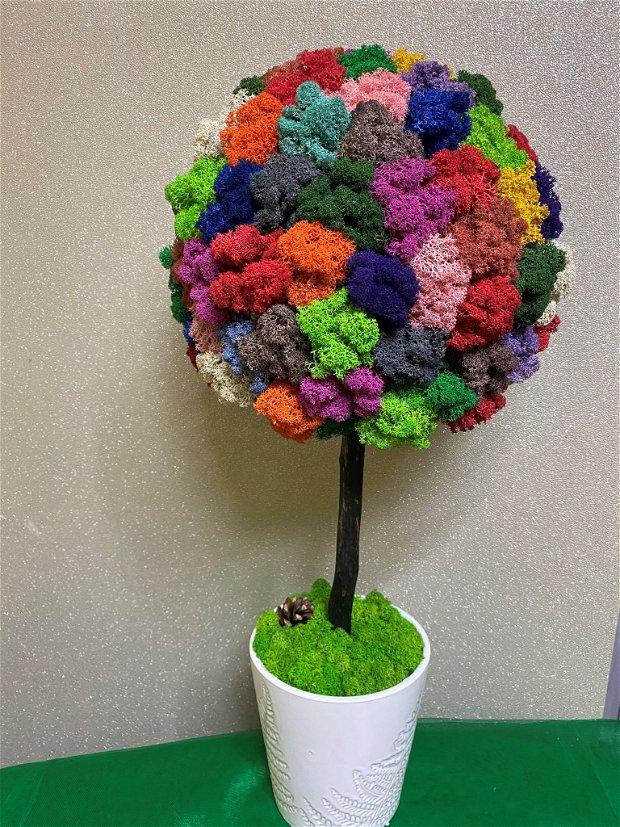Copacel in vas ceramic cu licheni stabilizati multicolori