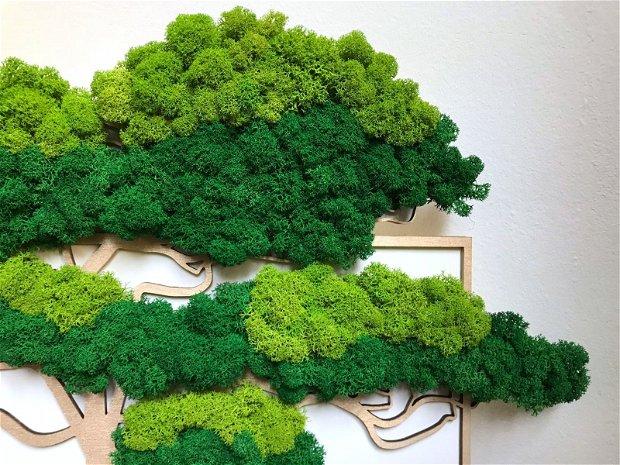 Padure de bonsai