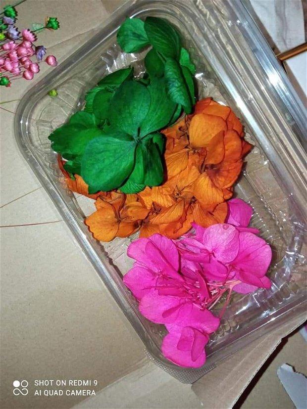 Flori stabilizate