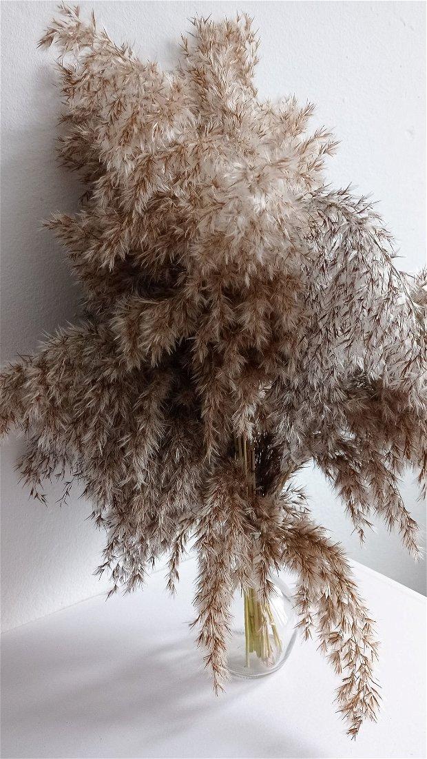 Stuf decorativ uscat Natur, 80 cm-25 fire/pachet